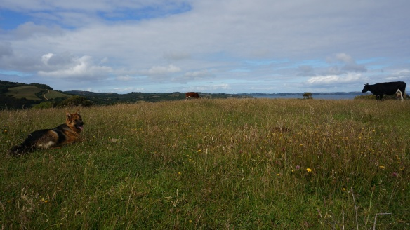 view from the upper pasture